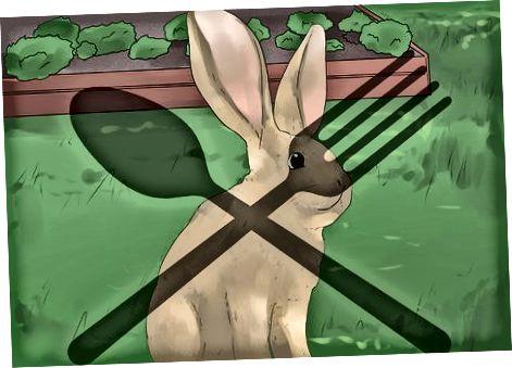 Comprender el comportamiento y la psicología del conejo