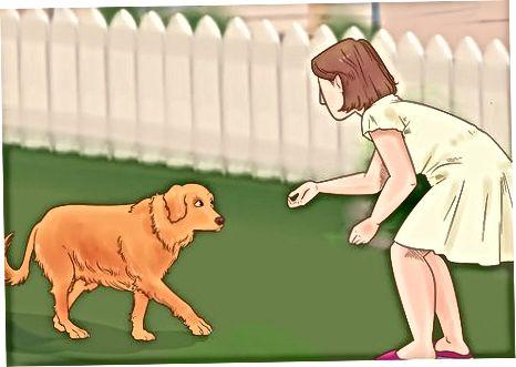 Reconociendo signos de afección canina
