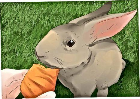 Tratar con un conejo agresivo