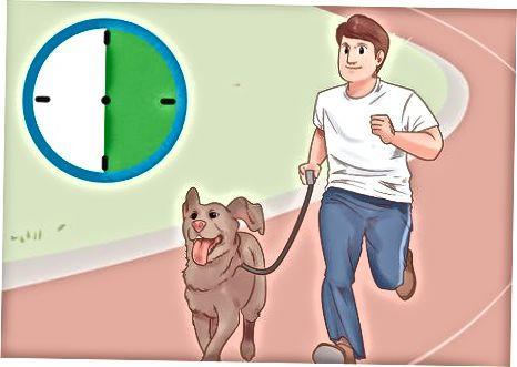 Suhte parandamine oma koeraga