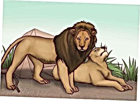 Didžiųjų laukinių felinų atpažinimas