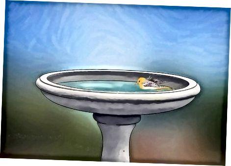 Proporcionando comida a las aves