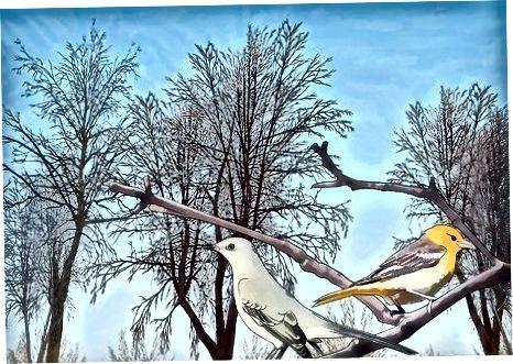 Proporcionando un hábitat natural para las aves