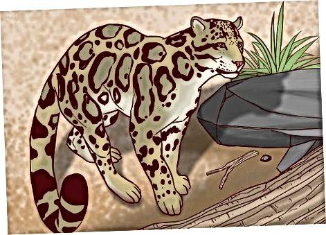 Mažesnių laukinių felinų identifikavimas