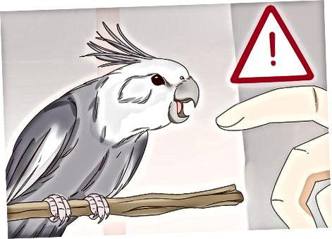 En busca de signos de agresión