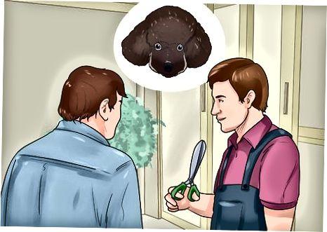 Příprava na oříznutí vašeho pudla