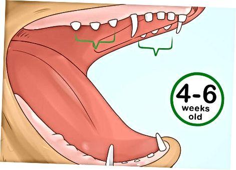 Examinando los dientes
