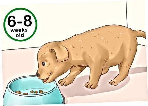Evaluar el cuerpo y el comportamiento del cachorro