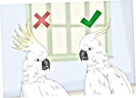 Tatt i betraktning Fuglens personlighet