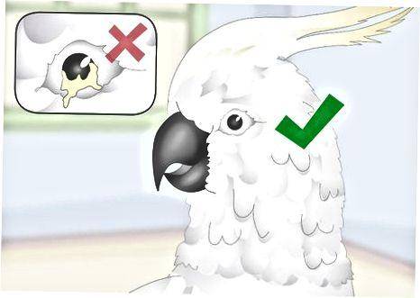 Kontroller Fuglens helse