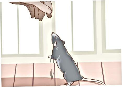 Cinneadh a dhéanamh Rats a Choinneáil
