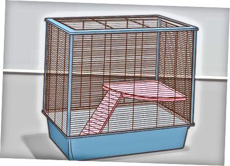 Creació d'una bona llar per a rates