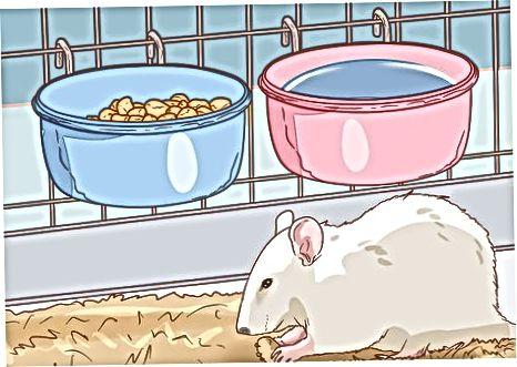 Rats a Choimeád Sláintiúil