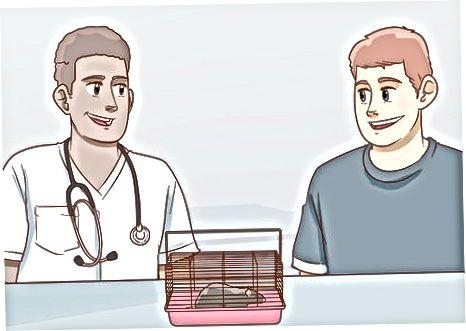 Pitää rotat terveinä