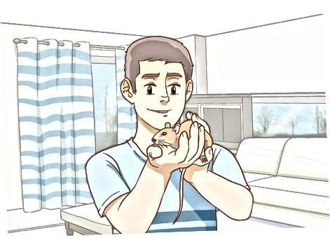 Mantenir les rates feliços