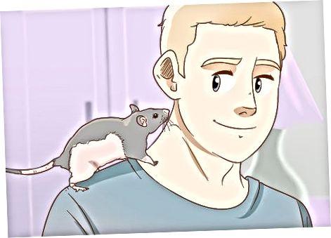 Pidä rotat onnellinen