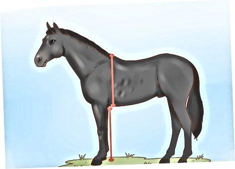 Utvärdera hästens balans