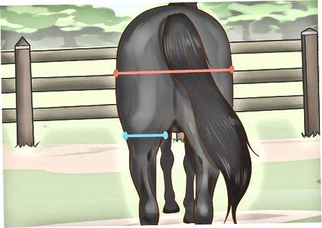 Kontrollera hästens muskler och struktur