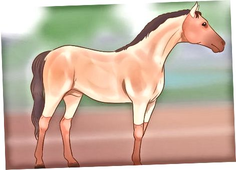 Med tanke på hästens handling, kvalitet och förfining