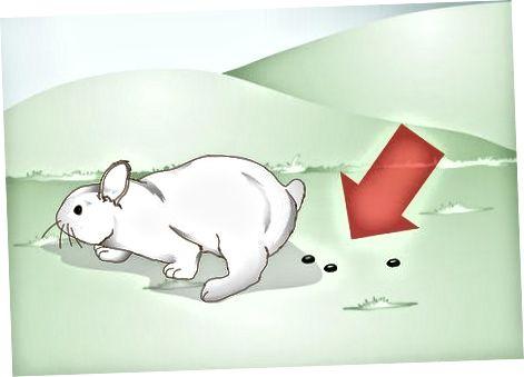 Reconociendo la estasis gastrointestinal en tu conejo