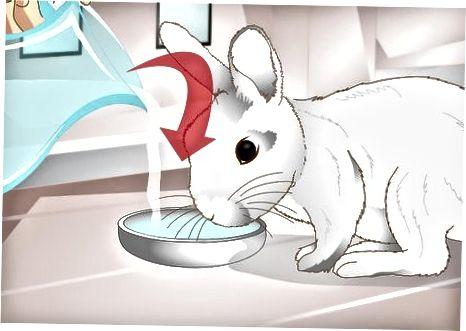 Tratamiento de la estasis gastrointestinal de su conejo