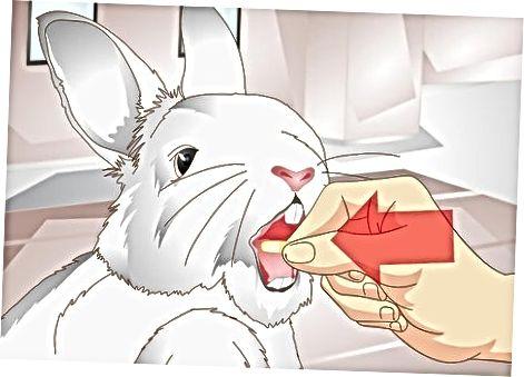Traitéiere Äre Rabbit säi GI Stasis