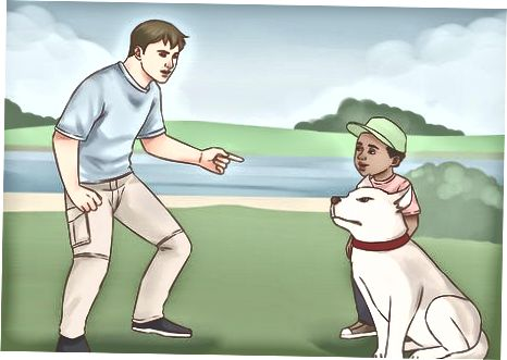 Interactuando con un perro desconocido