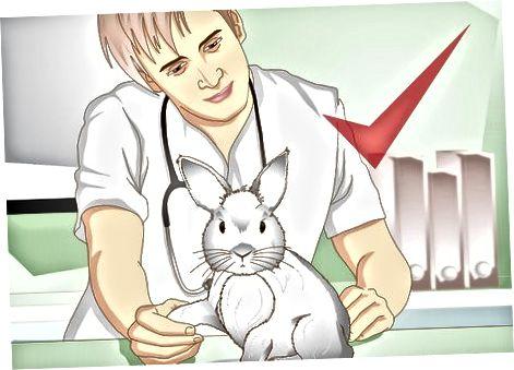 Prevención de estasis gastrointestinal en su conejo