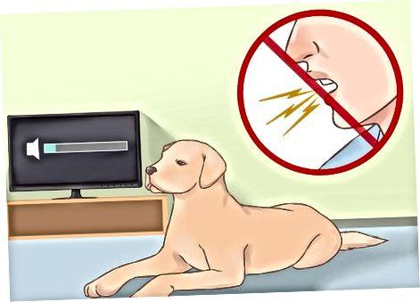Interactuando con tu perro