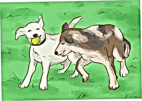 Enriqueciendo la mente de tu perro