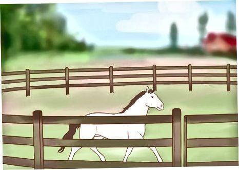 Približevanje neurejenemu konju