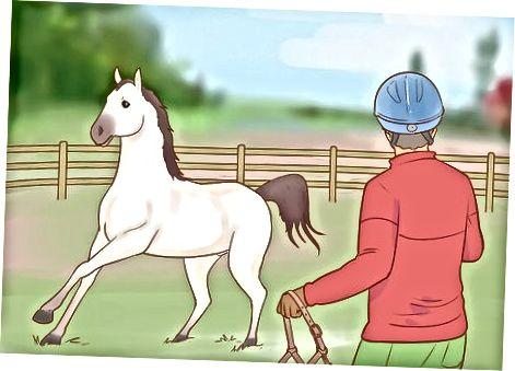 Närmar sig en orubblig häst