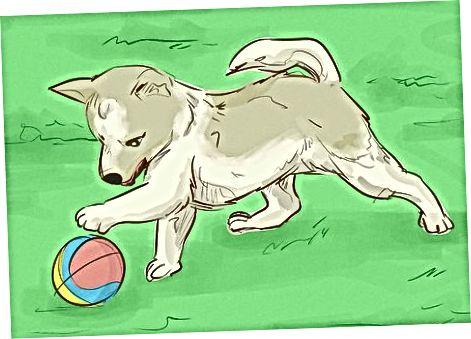 Mantener la salud física de tu perro