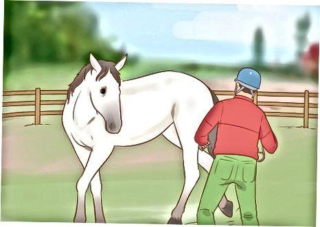 Apropierea de un cal dezgustat