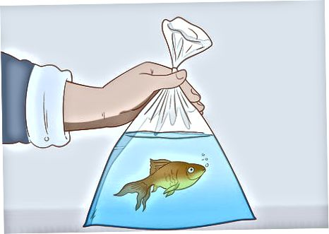 Agregar pescado a un tanque nuevo