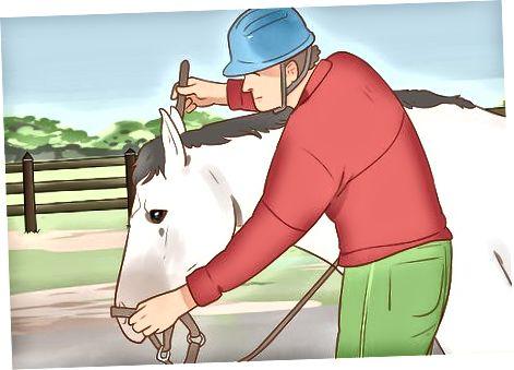 Usmiljenje konja