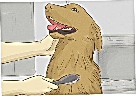 Mantener feliz a tu raza de perro