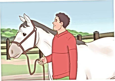 Îndepărtarea calului