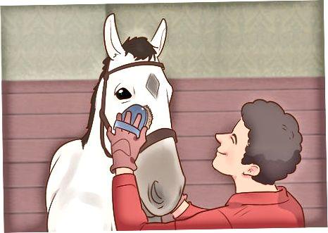 Haltering av hesten