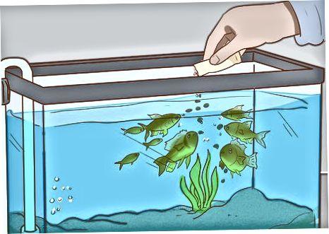 Poner pescado en un tanque existente