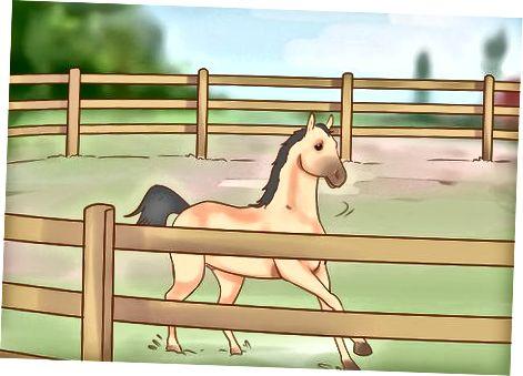 Dresează-ți calul în timp