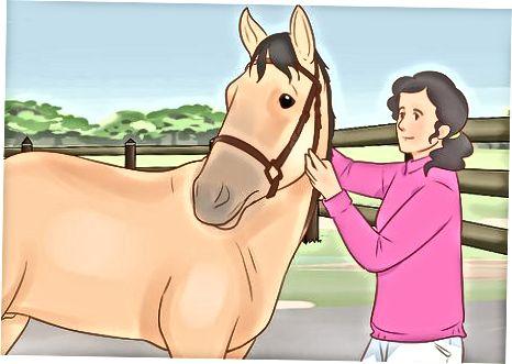 Trenirajte svojega konja čez čas