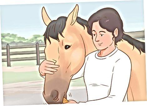 Εκπαιδεύστε το άλογό σας με την πάροδο του χρόνου