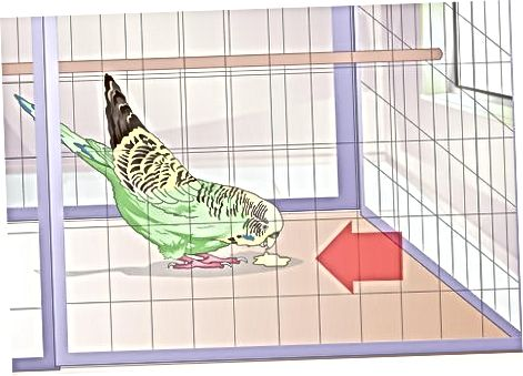 Hanging Hummingbird Feeders