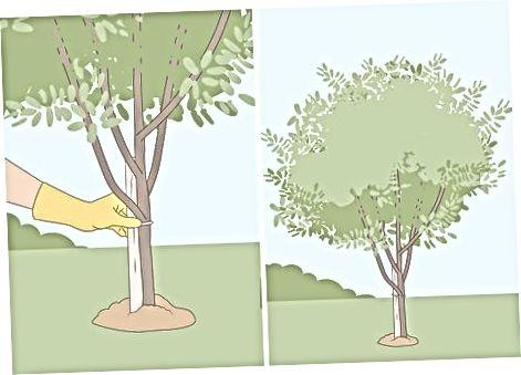 Малювання голубів до вашого двору