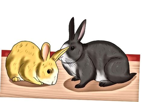 Evaluar si tiene un bebé o un conejo adolescente