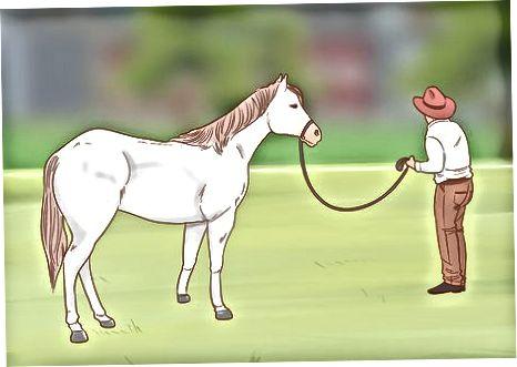 Ballafaqimi me kalin nga toka