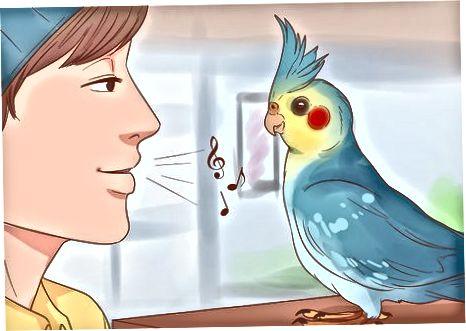 Manteniendo tu Cockatiel Estimulado