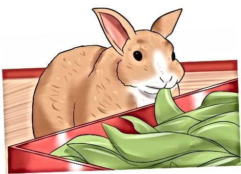 Pochopenie tráviaceho traktu králika