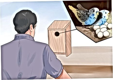 国内の赤ちゃんの鳥を育てる